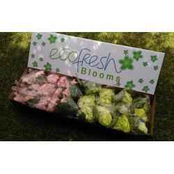 Light Pink and Fresh Green Hydrangeas