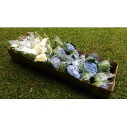 White and Light Blue Hydrangeas