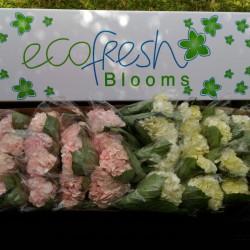 20 White and Pink Hydrangeas