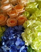Hydrangeas and Roses in bulk - Top quality flowers at wholesale prices